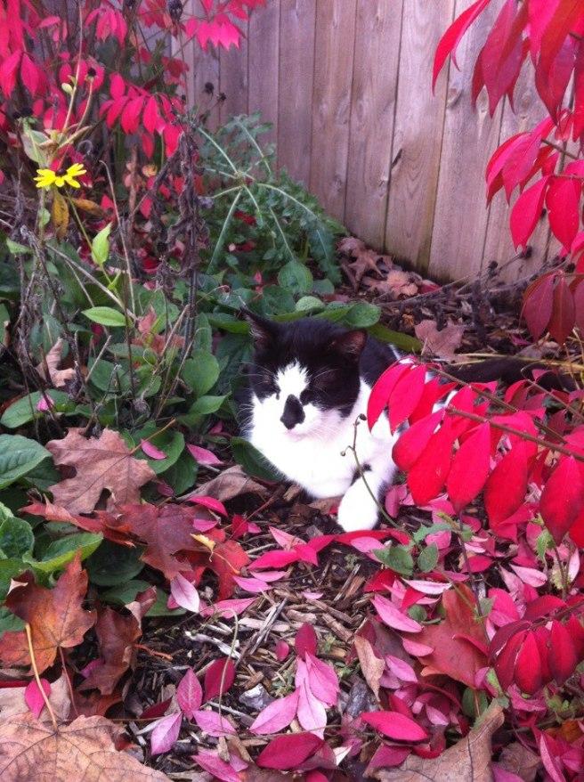 pookie garden